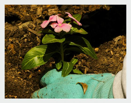 botanisch in 76703 Kraichtal