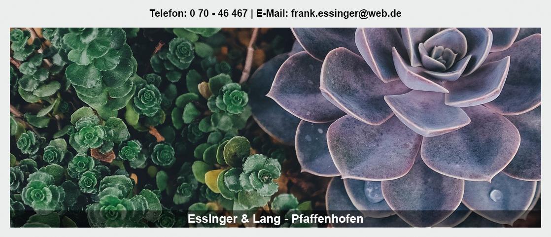 Blumengroßmarkt für Lehrensteinsfeld - Essinger Lang Pflanzenhandel GbR: Blumenhändler, Floristik Großhandel, Floristenbedarf,