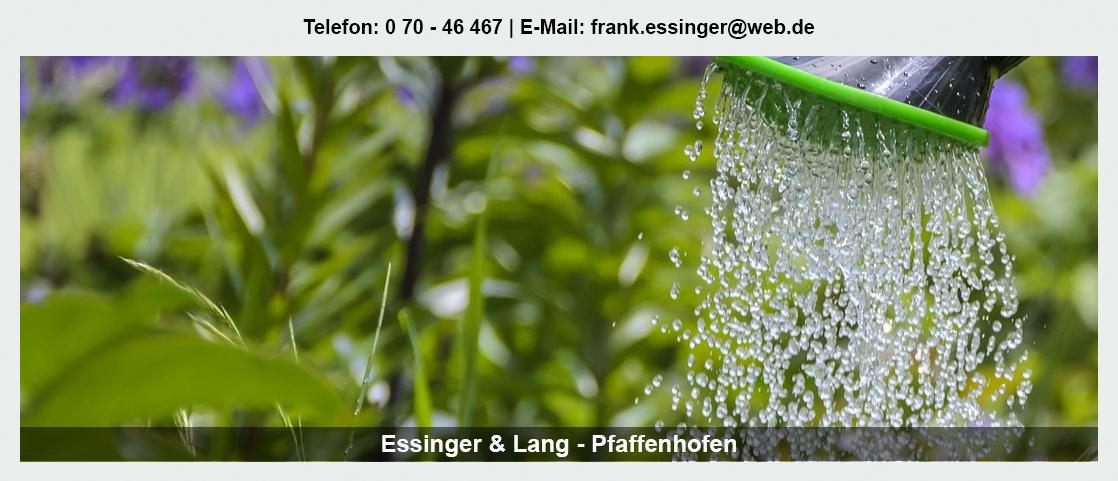 Blumengroßhandel Weinsberg - Essinger Lang Pflanzenhandel GbR: Blumenhändler, Floristik Großhandel, Floristenbedarf,