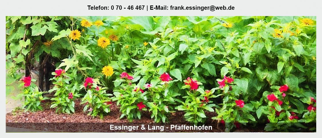 Blumengroßhandel für Sulzfeld - Essinger Lang Pflanzenhandel GbR: Floristik Großhandel, Blumenhändler, Floristikbedarf,
