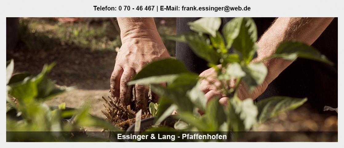 Blumengroßmarkt Beilstein - Essinger Lang Pflanzenhandel GbR: Floristik Großhandel, Floristenbedarf, Blumenhändler,