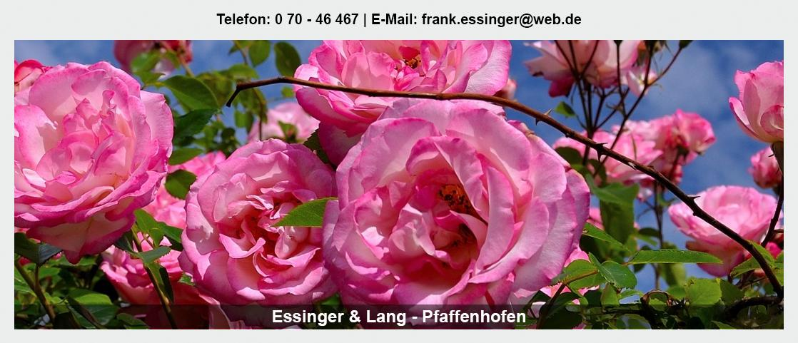 Blumengroßhandel Gundelsheim - Essinger Lang Pflanzenhandel GbR: Floristik Großhandel, Blumenhändler, Floristenbedarf,